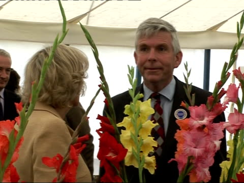 prince charles and the duchess of cornwall visit sandringham flower show; prince charles chatting to little girl / camilla holding a rose and... - グラジオラス点の映像素材/bロール