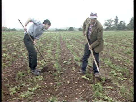organic farming itn two men hoeing in field tms hoe worked between crop - organic stock videos & royalty-free footage