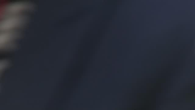 prince charles visits oxford botanic garden; england: oxfordshire: oxford: oxford botanic garden & arboretum: ext prince charles, prince of wales and... - sunglasses stock videos & royalty-free footage