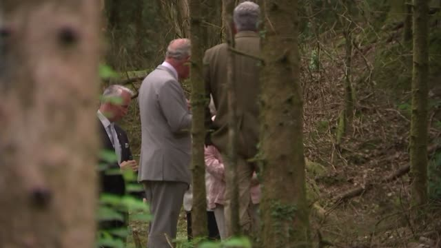 vídeos de stock, filmes e b-roll de prince charles meets horse loggers wales llantrisant tynycoed forest ext horse loggers working with horses in forest / prince charles prince of wales... - forester