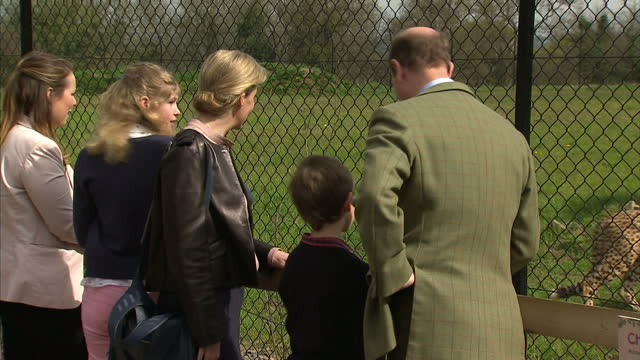 prince edward earl of wessex took his family along to a visit to the wild place project at bristol zoo lady louise windsor sophie countess of wessex... - lady louise windsor stock videos and b-roll footage