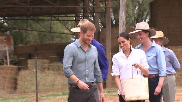 Prince Harry and Meghan Duchess of Sussex feeding cows and speaking to farmers on a visit to Dubbo Australia