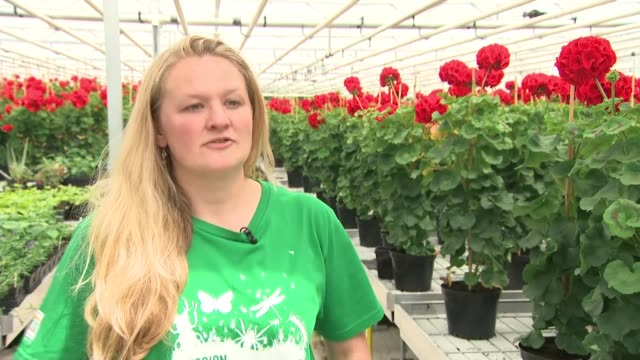 hyde park nursery flower preparations dr alice laughton interview sot - meghan harry stock videos and b-roll footage