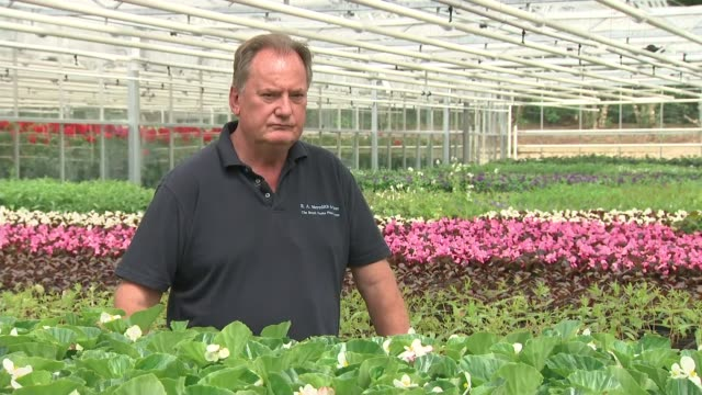 hyde park nursery flower preparations int mike jones interview sot - meghan harry stock videos and b-roll footage