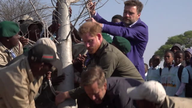 vídeos de stock e filmes b-roll de prince harry helps plant baobab tree in kasane, botswana, during his africa tour - planície