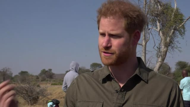vidéos et rushes de prince harry interview about climate change; botswana: ext prince harry, duke of sussex interview sot. - there isn't anyone involved in conservation... - botswana