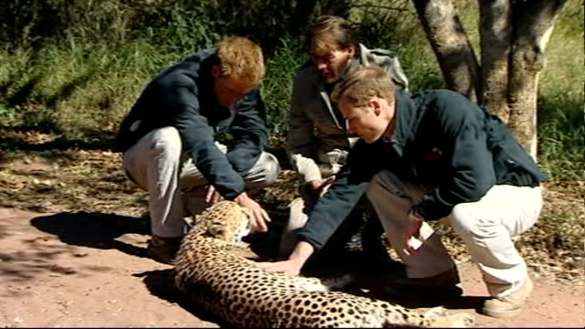 stockvideo's en b-roll-footage met prince of wales and duke of cambridge call for action to save endangered animals; lib botswana: mokolodi education centre and nature reserve: ext... - itv weekend evening news