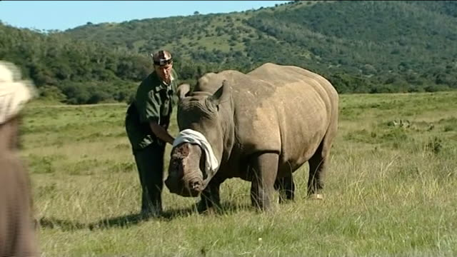 Prince of Wales and Duke of Cambridge call for action to save endangered animals T05041235 / TX 542012 Kariega Game Reserve Vets examining rhinoceros...
