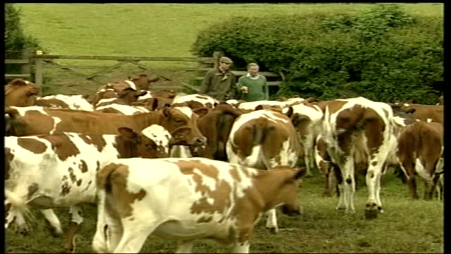 father's farm visit england gloucestershire duchy home farm ext ms long angle cameras of press lms prince william and prince charles along towards... - gloucestershire stock videos and b-roll footage