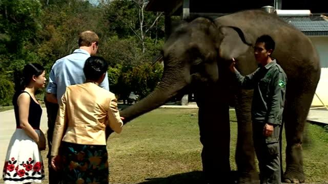 vídeos de stock, filmes e b-roll de prince william makes appeal to protect elephants china yunnan province wild elephant valley ext prince william duke of cambridge along to asian... - yunnan province