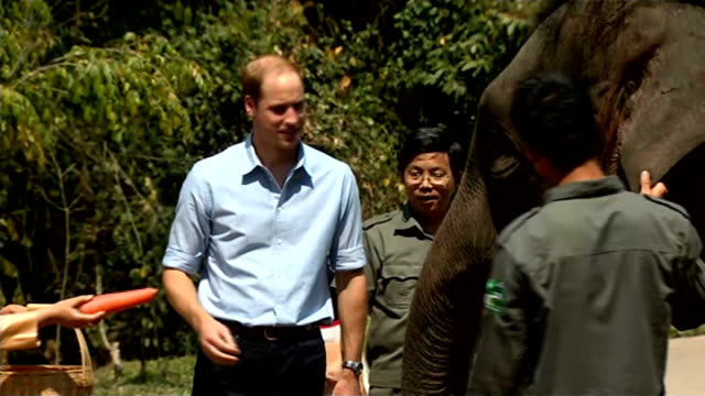 vídeos de stock, filmes e b-roll de prince william makes appeal to protect elephants china yunnan province wild elephant valley ext prince william duke of cambridge stroking elephant... - yunnan province