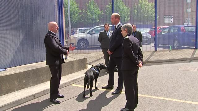 prince william visits croydon custody centre; england: london: croydon: ext prince william, duke of cambridge and cressida dick speaking with mental... - stroking stock videos & royalty-free footage