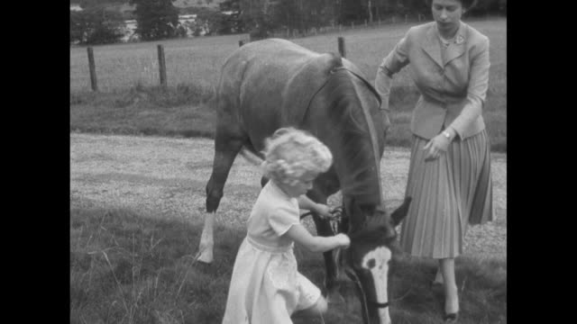 princess anne and prince charles feed carrots to a pony and a horse on the grounds of balmoral castle / queen elizabeth ii hitches reins to a horse... - queen royal person stock videos & royalty-free footage