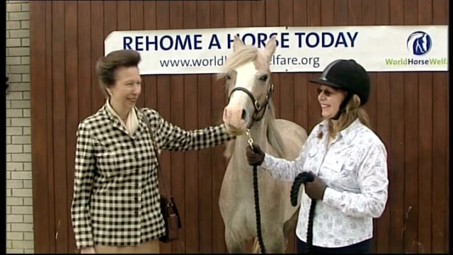 princess anne at world horse welfare's glenda spooner farm england somerset westonsupermare kingsdon world horse welfare's glenda spooner farm ext... - weston super mare stock videos and b-roll footage