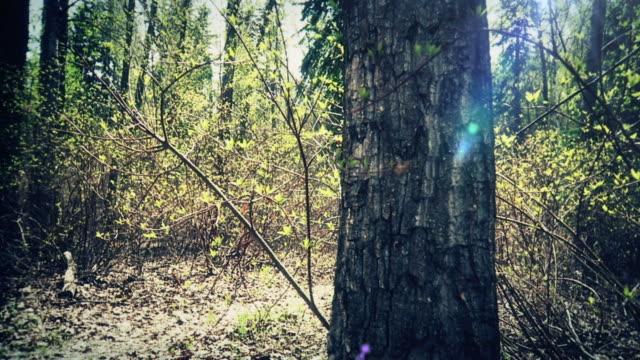 プリンセスの森