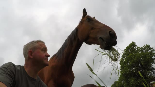 prinz harry is a truly amazing horse with a gift for working magic with people in different circumstances he lives at a farm called the mane intent... - working animals stock videos & royalty-free footage