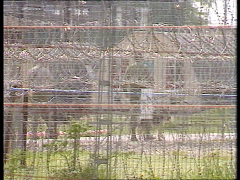 stockvideo's en b-roll-footage met warning; itn lib england hmp rollestone tlms prisoners gathered outside prison huts surrounded by barbed wire lms prison officers along with dogs... - prikkeldraad
