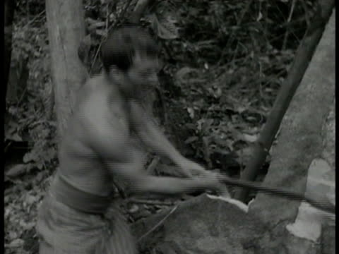 vidéos et rushes de prisoners cutting on trees w/ axes. tree tilting & falling in woods. punishment, french penal colony, harsh conditions, criminals, exiles. - dom tom