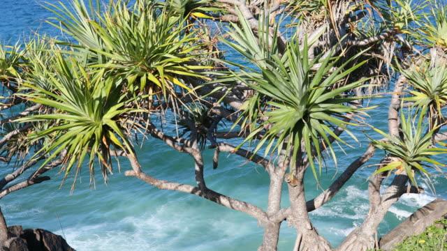 vídeos de stock, filmes e b-roll de intocada praia limpa no cabarita, nsw, austrália - condição natural