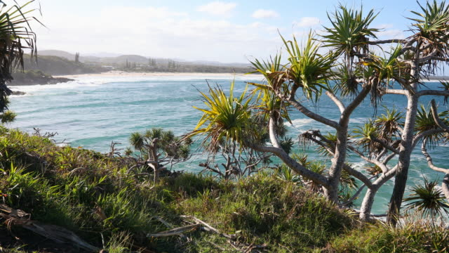 pristine clean beach at cabarita, nsw, australia - north stock videos and b-roll footage