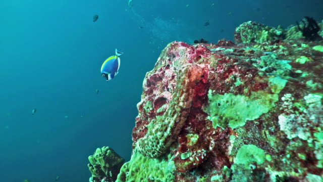 pristine coral reef, scuba diver point of view, hin muang, thailand - scuba diver point of view stock videos & royalty-free footage