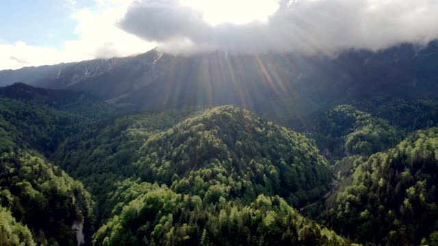 pristine forest in zarnesti gorge, piatra craiului national park ,carpathian mountains/ aerial drone view, romania - transylvania stock videos & royalty-free footage