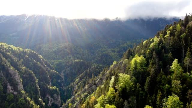 pristine forest in zarnesti gorge, piatra craiului national park ,carpathian mountains/ aerial drone view, romania - spruce stock videos & royalty-free footage