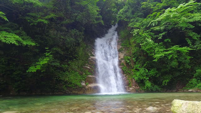 pristine heavy flowing waterfall in lush mountain forest - waterfall stock videos & royalty-free footage