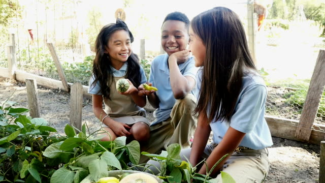 private elementary students on a field trip at a local farm examine banana pepper and zucchini - field trip stock videos & royalty-free footage