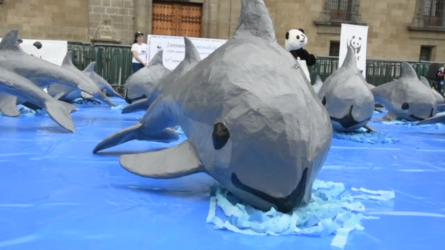 pro animal activists carried out a protest in front of mexico city's national palace to ask the government to protect the rare and near extinct... - cetacea stock videos & royalty-free footage