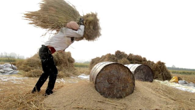 Process of Rice Harvesting