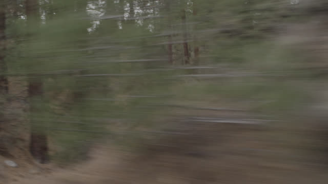 stockvideo's en b-roll-footage met process plate straight right of pine trees in forest, mountains. rural area. - naaldbos