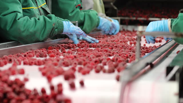 processing of raspberry on conveyor belt. harvest sorters with blue gloves - frozen stock videos & royalty-free footage