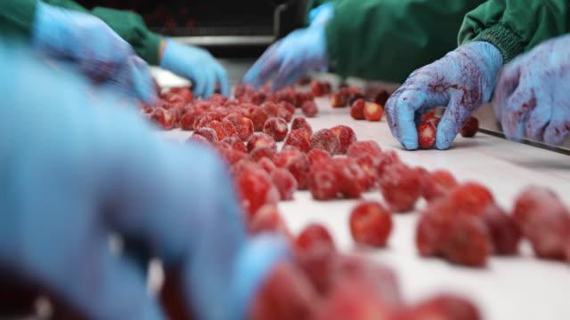 processing of strawberries on conveyor belt. harvest sorters - fruit stock videos & royalty-free footage