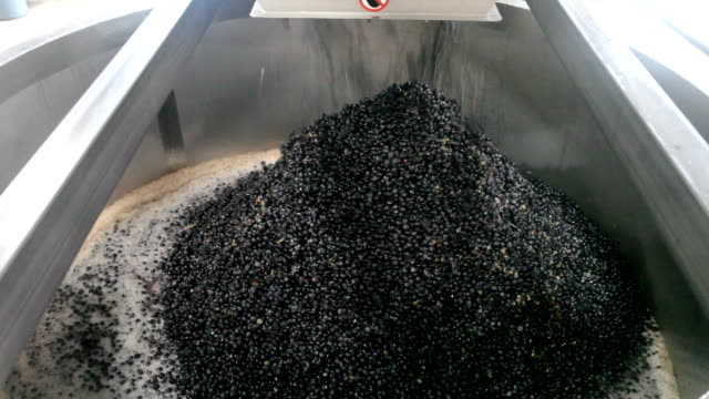 Processing Pinot Grapes for Wine