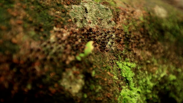 Processional Termites in the forest, slow motion