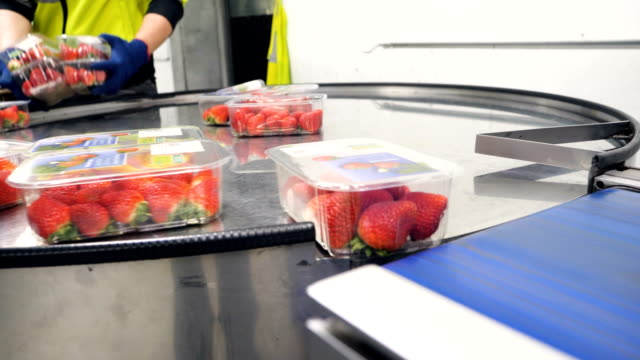 production line packaging strawberry for market and supermarkets. - plastic container stock videos & royalty-free footage
