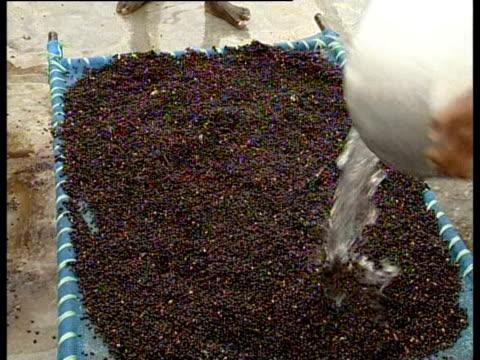 production of hybrid cotton seeds - vattna bildbanksvideor och videomaterial från bakom kulisserna