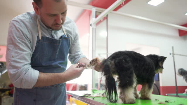 professional dog groomer at his workplace - working animal stock videos & royalty-free footage