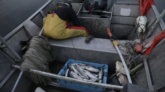 professional fisherman mickael ranson continues to work during the lockdown period, he removes his fishing nets in lac du bourget in the early... - fish stock videos & royalty-free footage