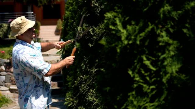 professional gardener pruning an green hedge - pruning stock videos & royalty-free footage