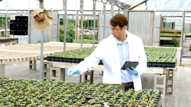 Professional scientist studying plant life in greenhouse laboratory