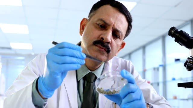 ms pan professor examining samples in laboratory / delhi, india - petri dish stock videos and b-roll footage