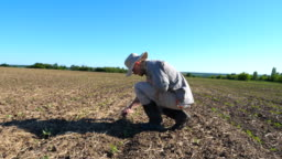 Profile of angry male farmer examining dry soil around green sprouts on the field.