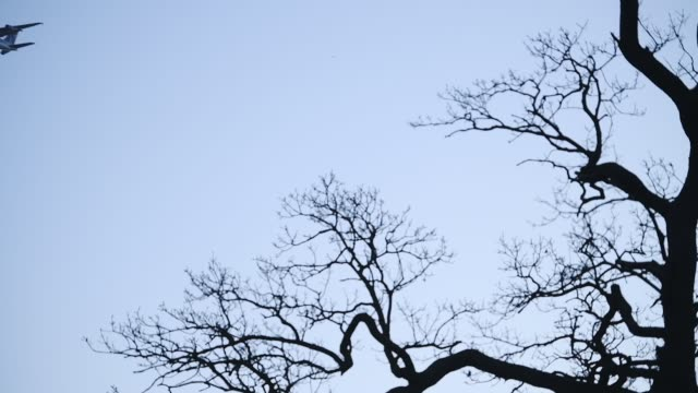 profiles of the bare trees and an airplane flying low in the skies of london, england. -wide shot - bare tree stock-videos und b-roll-filmmaterial