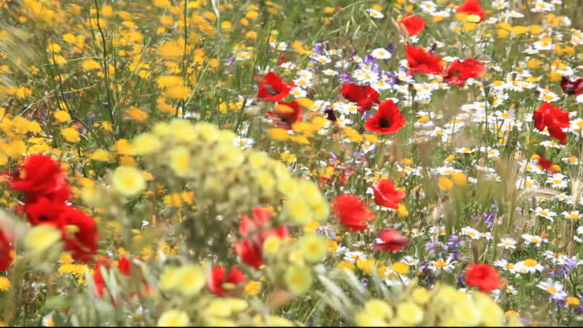 a profusion of wild flowers growing on a roadside verge in andalucia, spain. - biodiversity stock videos & royalty-free footage