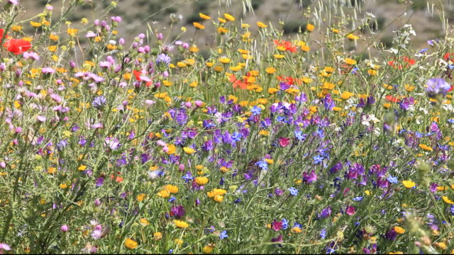 A profusion of wild flowers growing on a roadside verge in Andalucia, Spain.