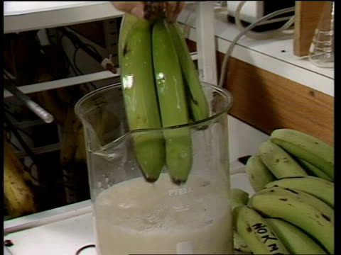 vidéos et rushes de reading gv stall of veg and fruit cms quotprolongquot solution mixed in lab cms green bananas soaked and removed cms bunches of bananas hanging in... - banane fruit exotique