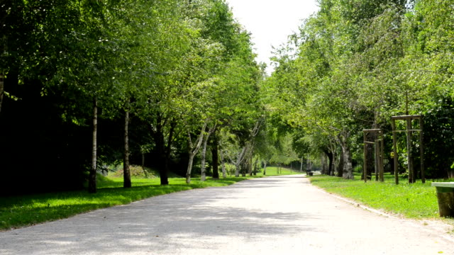 Promenade planted with trees