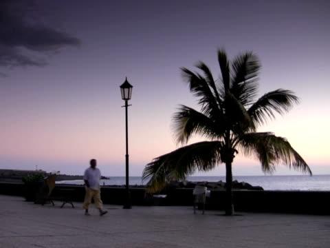 vidéos et rushes de ntsc : promenade - arbre tropical